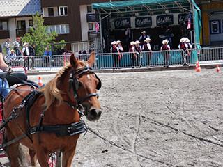 Horses' festival